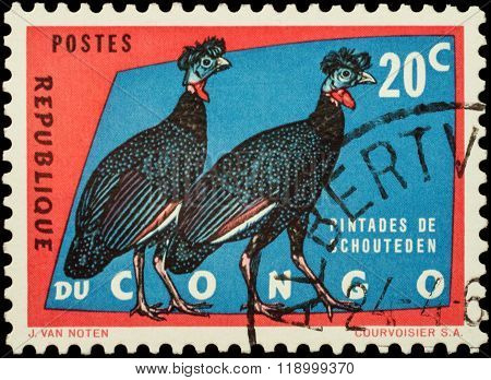 Crested Guineafowl (guttera Edouardi) On Postage Stamp