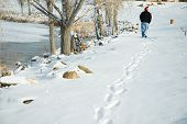 picture of trailblazer  - a man walks along the shore of shadow lake in the redlands mesa neighborhood grand junction colorado after a snowstorm - JPG
