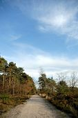 Forrest Path With Blue Sky.