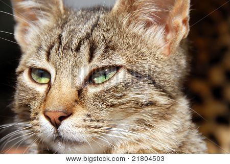 Young Mixed-bred Cat Portrait