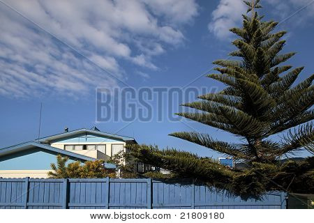 Blue House With Norfolk Pine