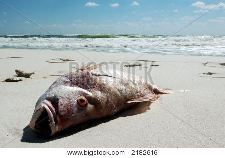 Dead Fish