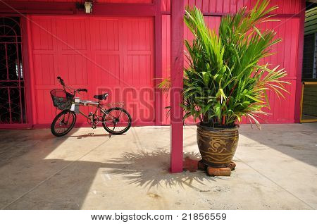 plantas pote