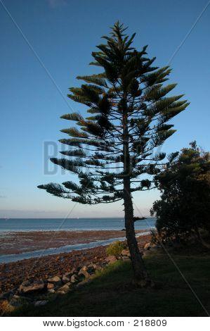 Pine Tree Beach