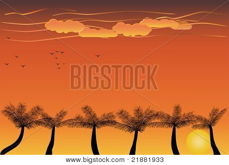 Palm trees at tropical sunset