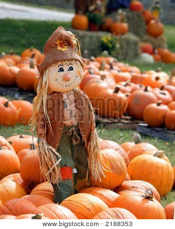 Scarecrow In Patch Of Pumpkins