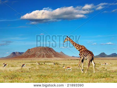 Sabana africana con jirafa y antílopes pastoreo