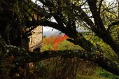 pic of walking away  - old ruined house behind autumn leafless tree - JPG