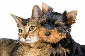 image of puppy dog face  - The puppy and kitten in studio on a neutral background - JPG