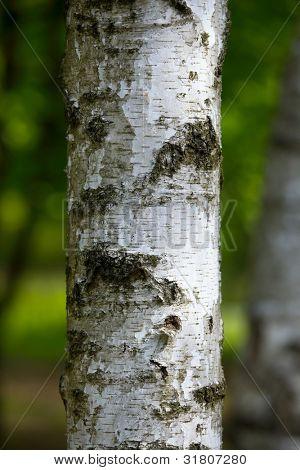 Closeup de tronco de árbol