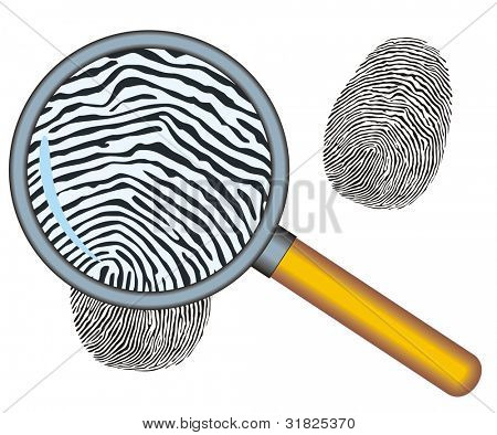 Magnifying glass with fingerprint  on the white background Vector