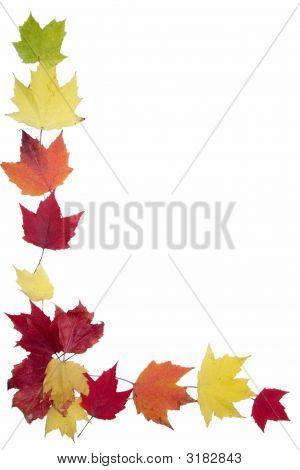 Autumn Maple Leaf Frame