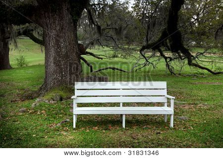 White bench under spooky live Oak trees