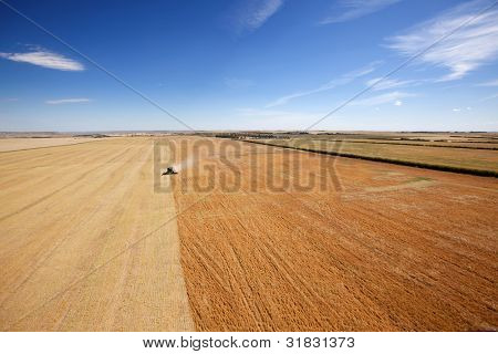 Aerial view of a combine harvesting lentils on the open prairie