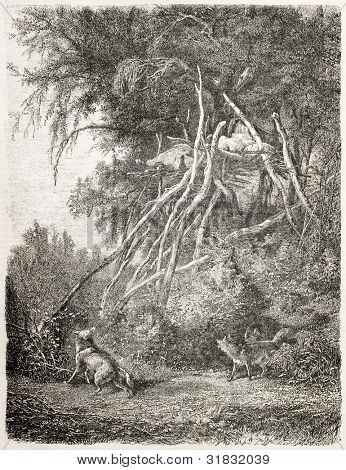 Assiniboins native Americans burial, old illustration. Created by Bodmer, published on L'Illustration, Journal Universel, Paris, 1863