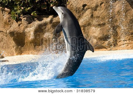 Dolphin dancing in water