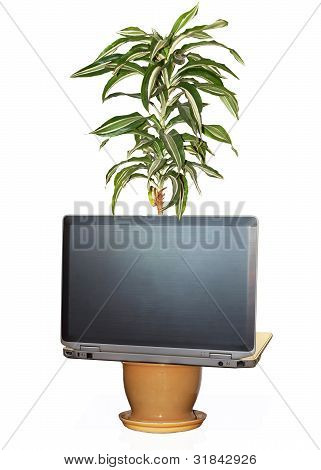 A Flower Grows From A Laptop