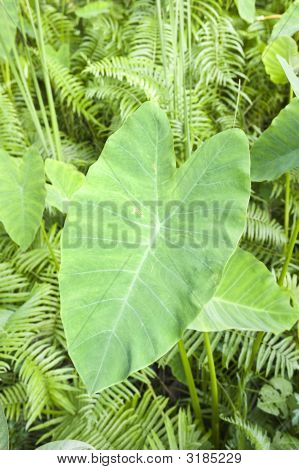 Leaf In Shape Of Heart