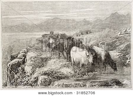 Cow herd watering old illustration, Auvergne, France. Created by Bonheur, published on L'Illustration, Journal Universel, Paris, 1863