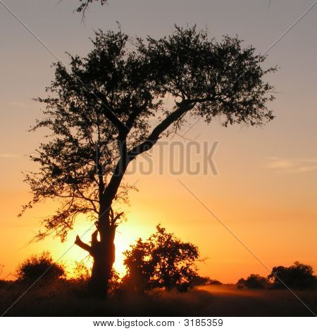 Sunset Behind Tree