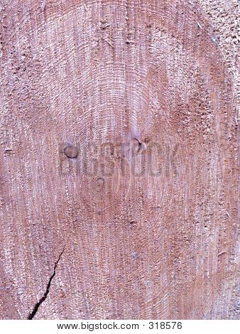 Log Cross Section 1