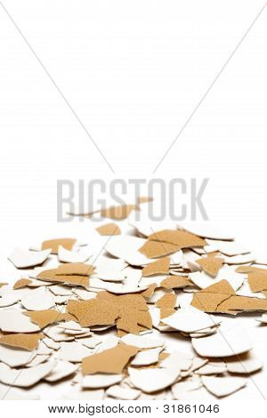 Abstract shell background