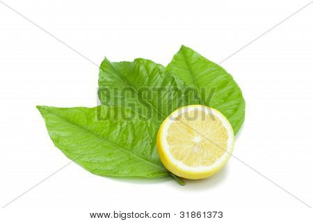 Lemon Fruit Decorated With Leaves On White
