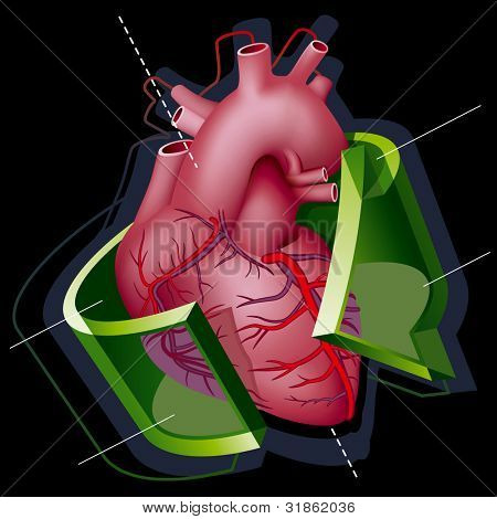 Human Heart with Axes and Green Transparent Arrow around it on Black Background. Rasterized version