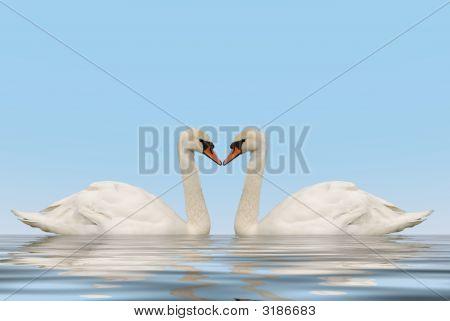 Dos cisnes con reflexión