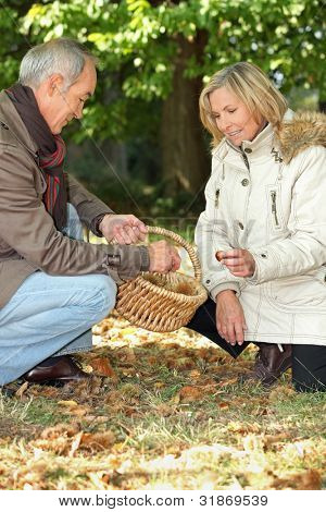 Senior man and senior woman collecting chestnuts