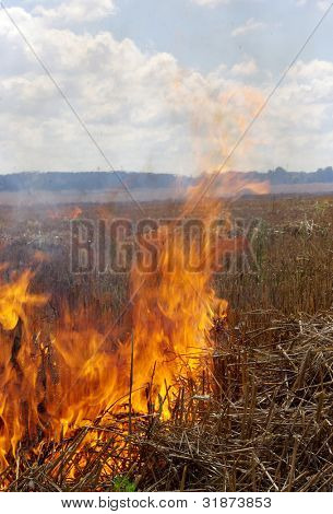 The field is conflagrant afire