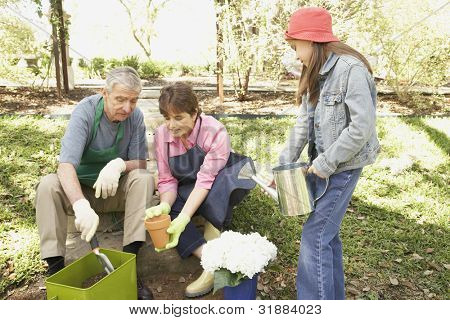 Hispanic grandparents and granddaughter gardening