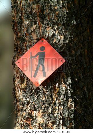 Walk This Trail
