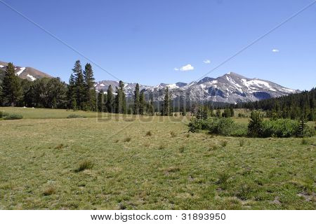 Meadows (Tuolumne Meadows)