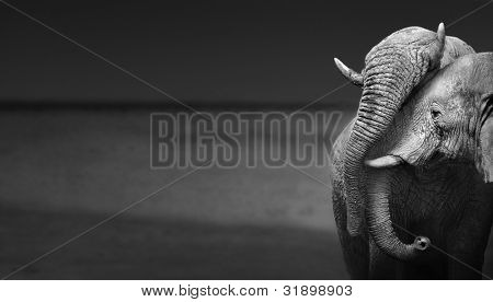Elephants interacting (Artistic processing)