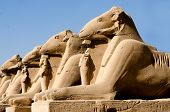 foto of anubis  - Karnack temple Anubis statues against clear blue sky - JPG