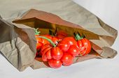 Ugly Tomatoes Variety Voyage In A Paper Bag poster