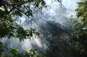 Sunlight Through Forest Fire Smoke