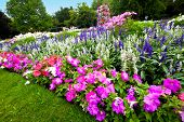 picture of manicured lawn  - Pretty manicured flower garden with colorful azaleas - JPG