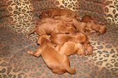 Eight Puppies