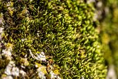 Fluffy Soft Green Moss In The Forest. Soft Moss Carpet. Detailed Image Of Moss. Background Image. poster