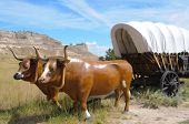 stock photo of ox wagon  - oxen and covered wagon - JPG
