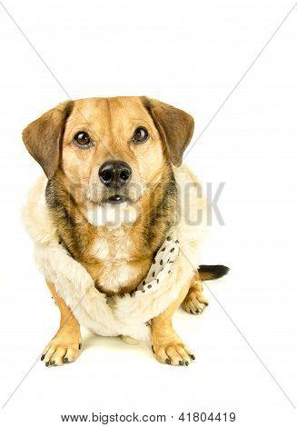perro y piel