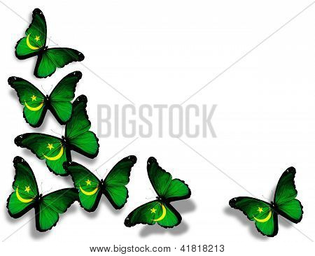 Mauritanian Flag Butterflies, Isolated On White Background