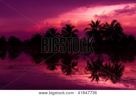 Coconut Tree Silhouette