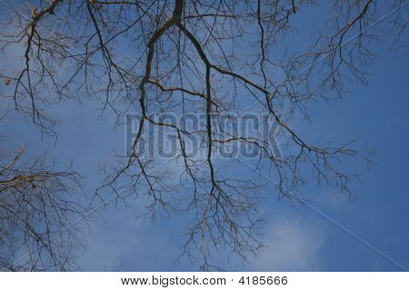 Tree Branches Against Sky