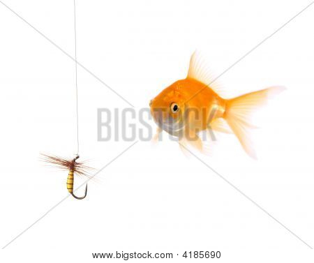 Golden Fish And A Fishing Bait