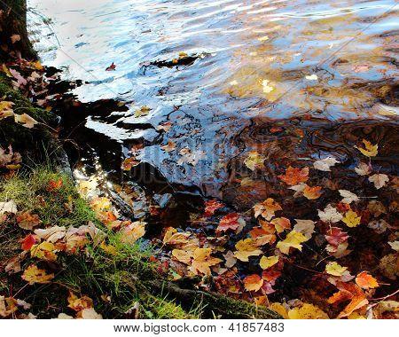 Refelction do Outono