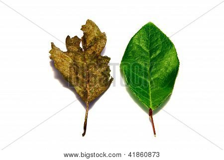 Leaves in Contrast