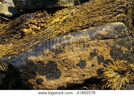Abstract - Brown Kelp On Granite Boulder
